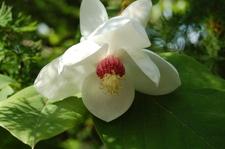 June_flowers_063