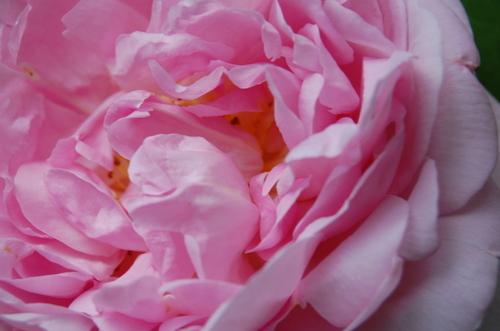 June_flowers_076