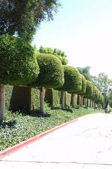 California_2007_715