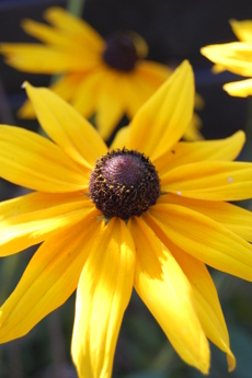 Fall_flowers_051_6
