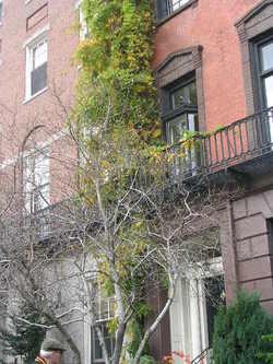 Boston_2006_005