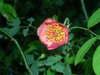 Summer_flowers_1_002