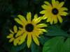 Summer_flowers_1_004